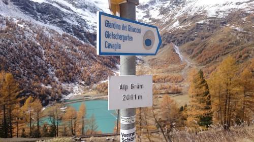 Alp Grum